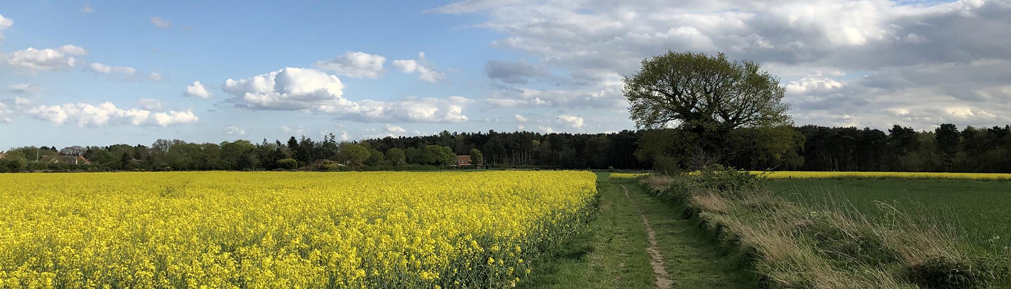 Briston countryside view